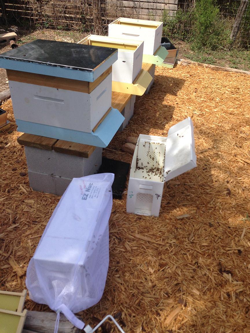 hives-nuc