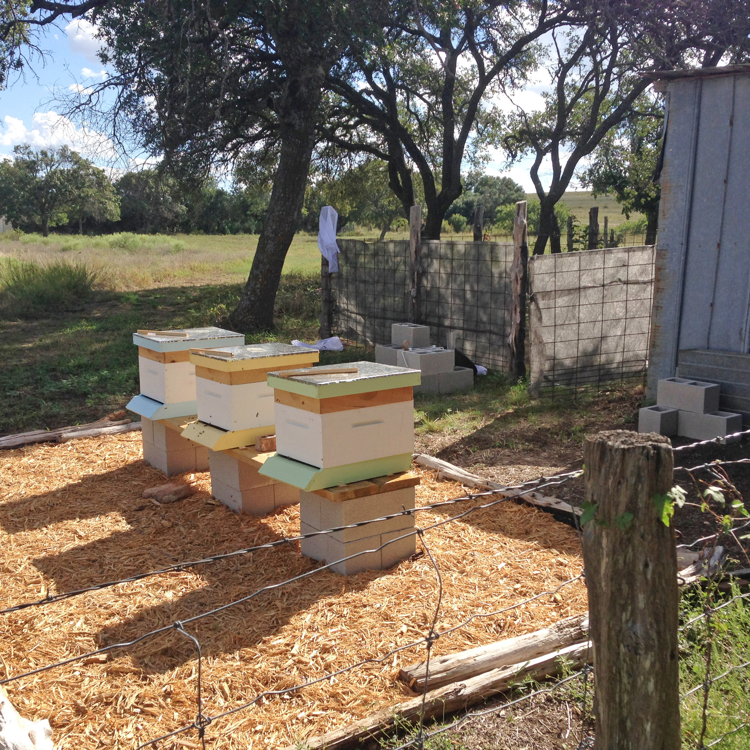 The bees settling in