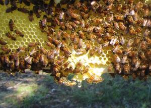 A drip of honey