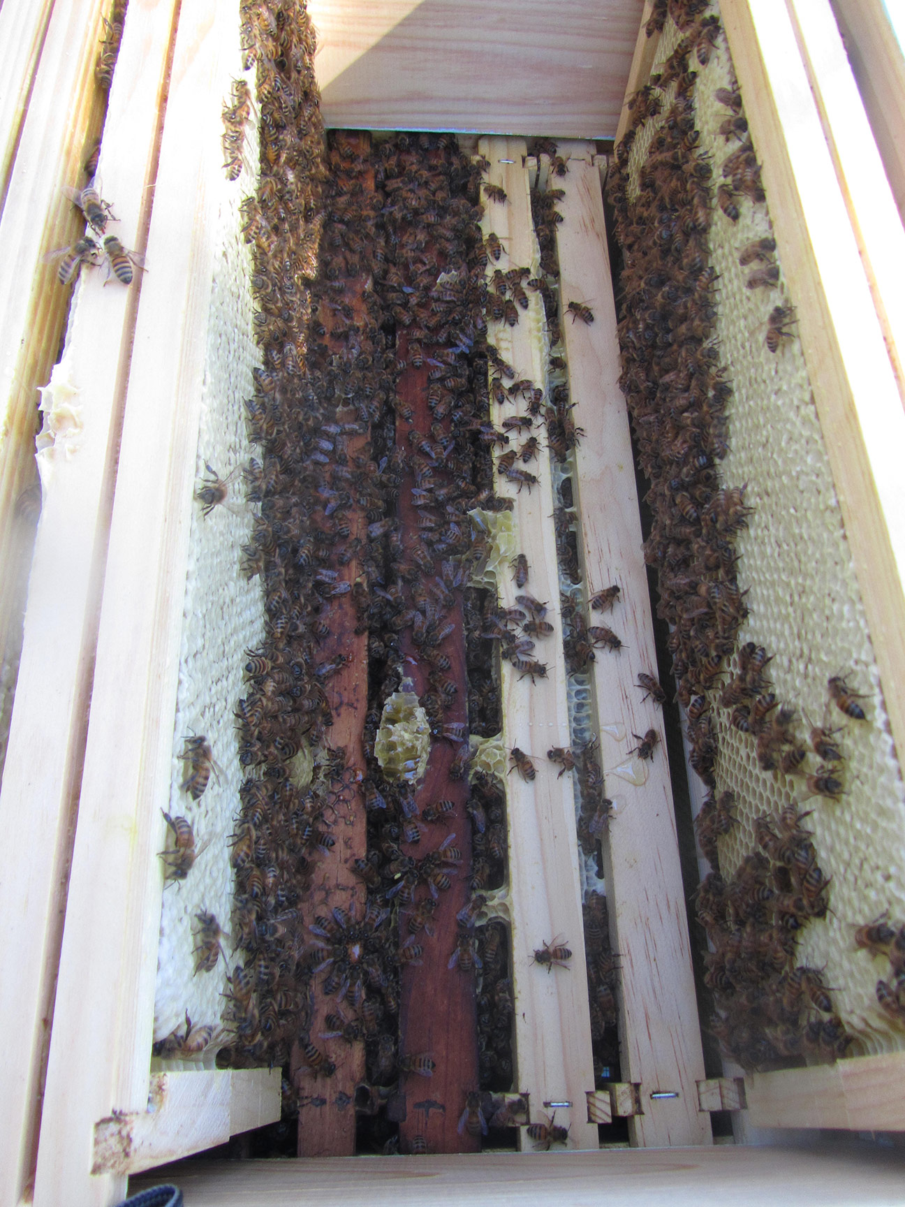 Looking down into the hive