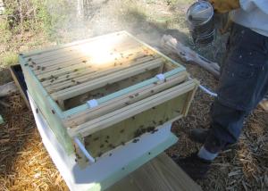 Smoking the hive