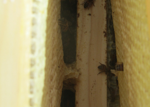 January Check on Hive 1