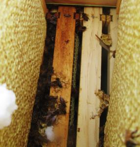 Hye Honey - winter bee check in