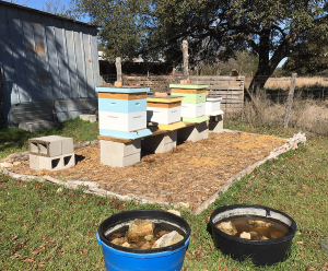 4-hives-and-watertroughs