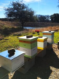 hives-stock-tank