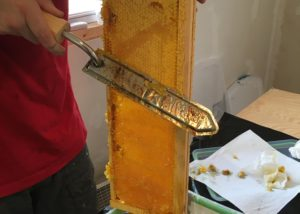 Cutting wax cappings off of the frame