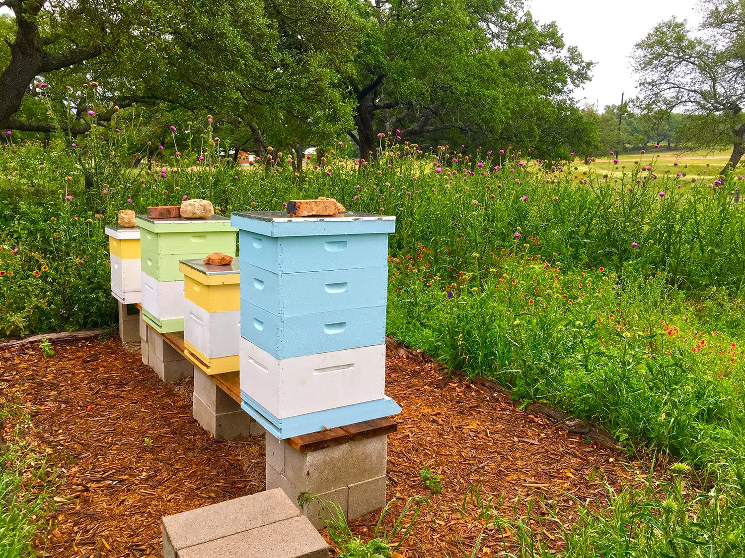 HIves and tall flowers - bees - Hye Honey
